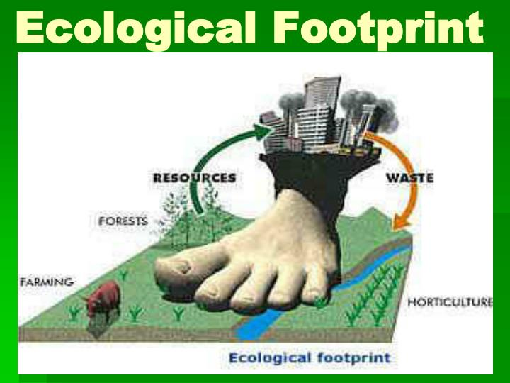 ecological footprint essay introduction
