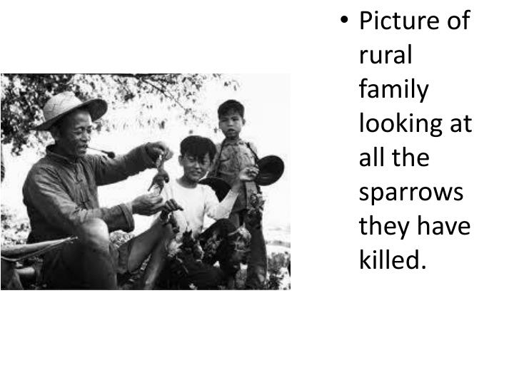 Picture of rural family looking at all the sparrows they have killed.
