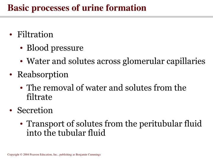 Basic processes of urine formation