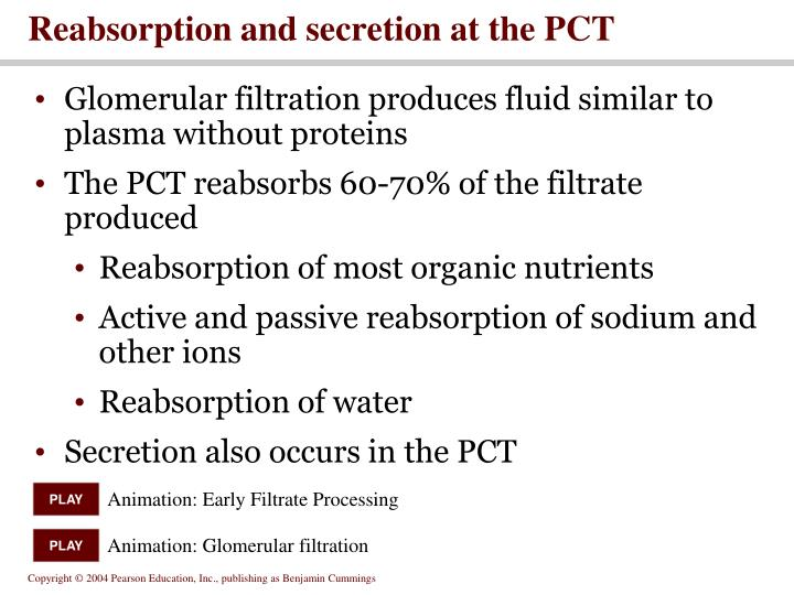 Reabsorption and secretion at the PCT