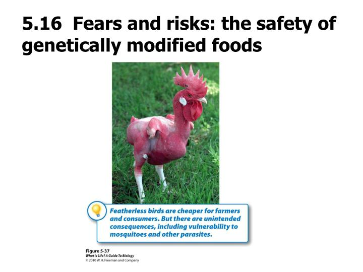 5.16  Fears and risks: the safety of genetically modified foods