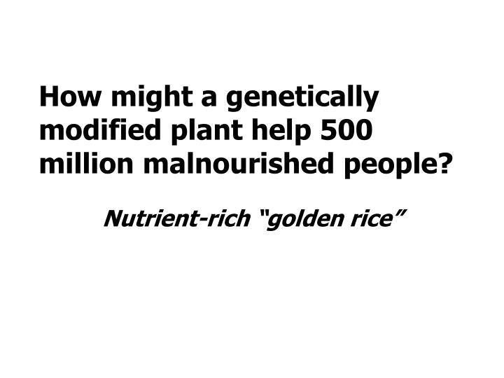 How might a genetically modified plant help 500 million malnourished people?