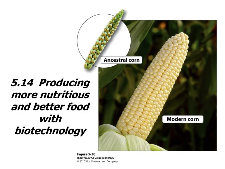 5.14  Producing more nutritious and better food with biotechnology