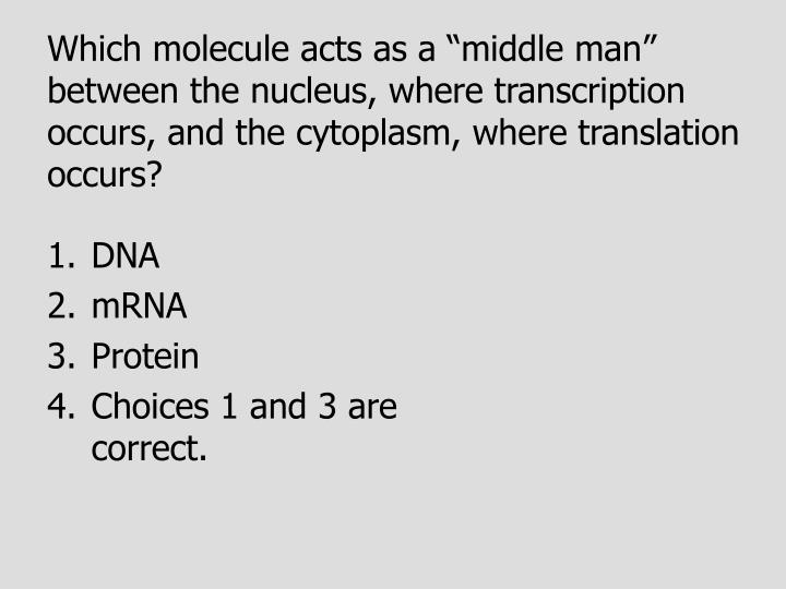 "Which molecule acts as a ""middle man"" between the nucleus, where transcription occurs, and the cytoplasm, where translation occurs?"