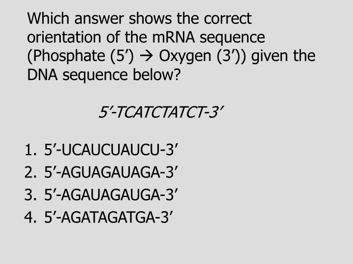 Which answer shows the correct orientation of the mRNA sequence (Phosphate (5')