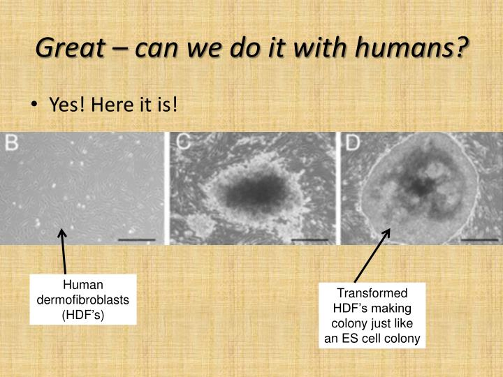 Great – can we do it with humans?