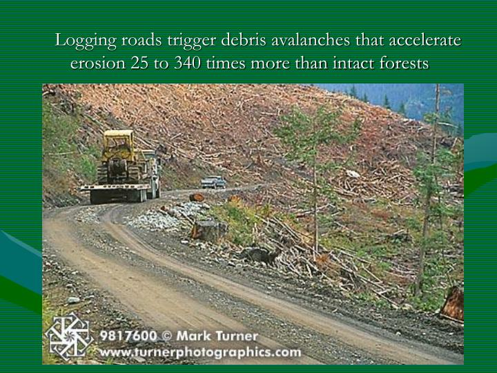 Logging roads trigger debris avalanches that accelerate erosion 25 to 340 times more than intact forests