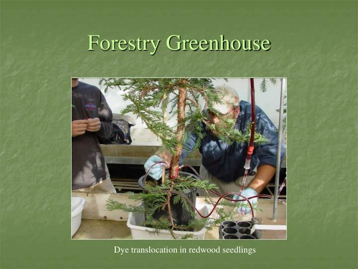 Forestry Greenhouse