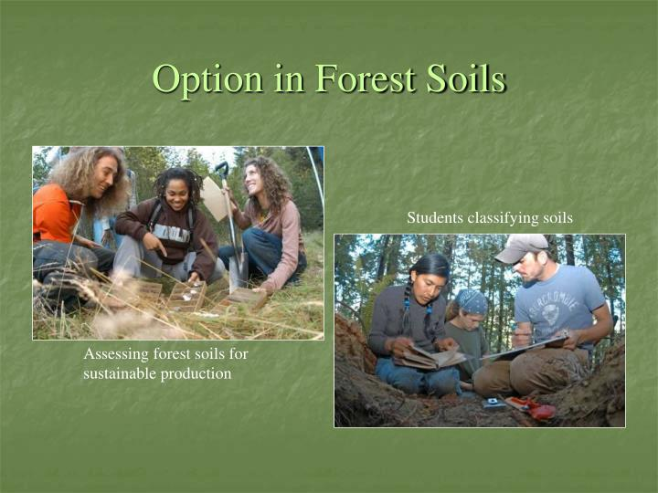 Option in Forest Soils