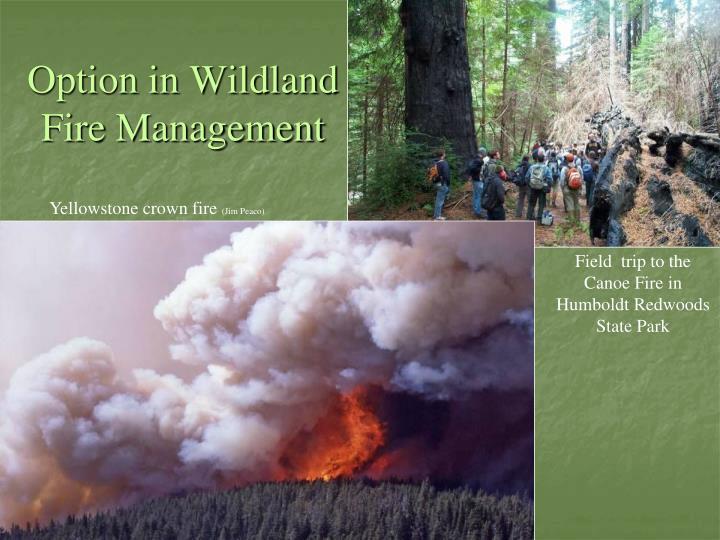 Option in Wildland Fire Management