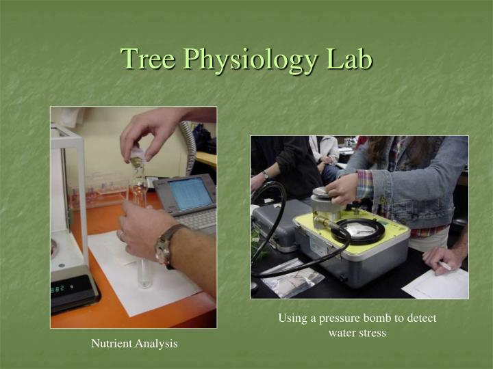 Tree Physiology Lab