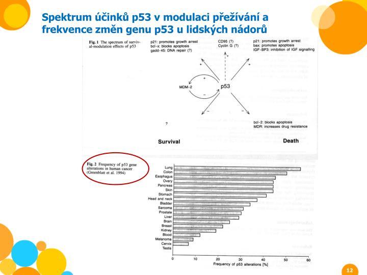 Spektrum účinků p53 v modulaci přežívání a frekvence změn genu p53 u lidských nádorů