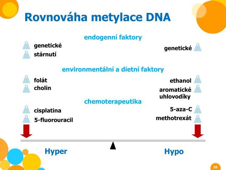 Rovnováha metylace DNA