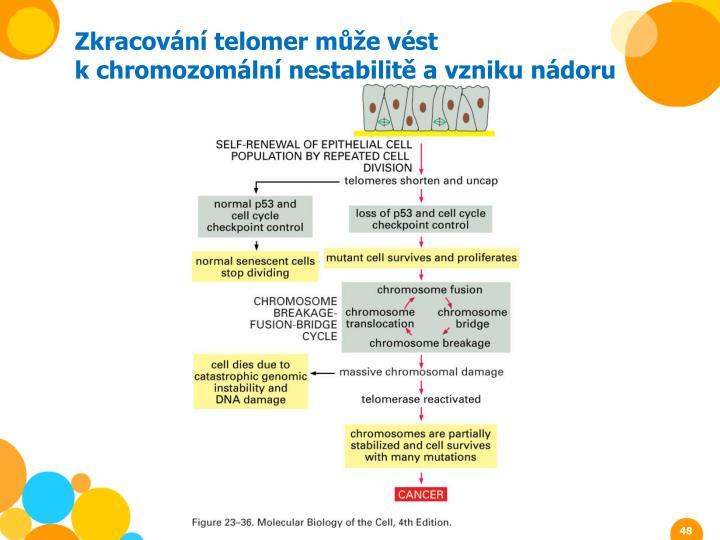 Zkracování telomer může vést