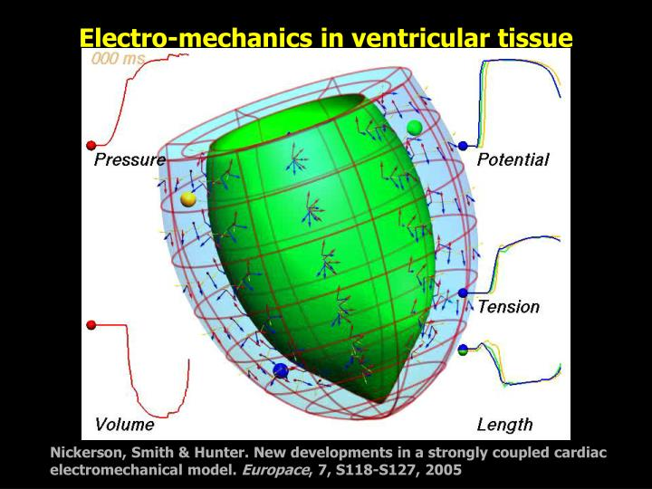 Electro-mechanics in ventricular tissue