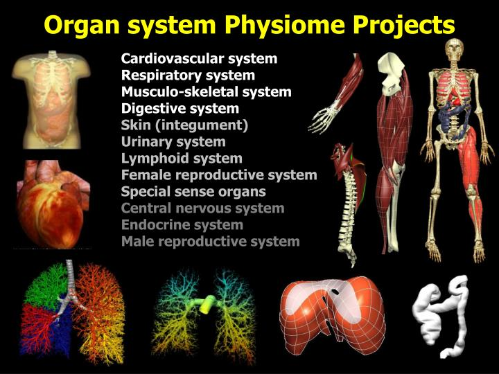 Organ system Physiome Projects