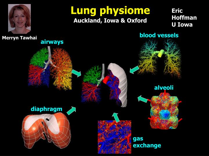 Lung physiome