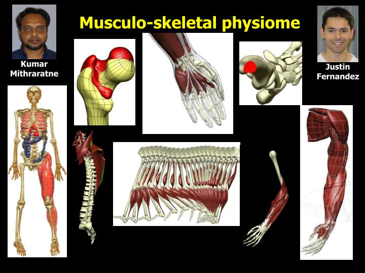 Musculo-skeletal physiome