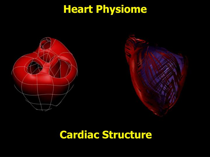 Heart Physiome