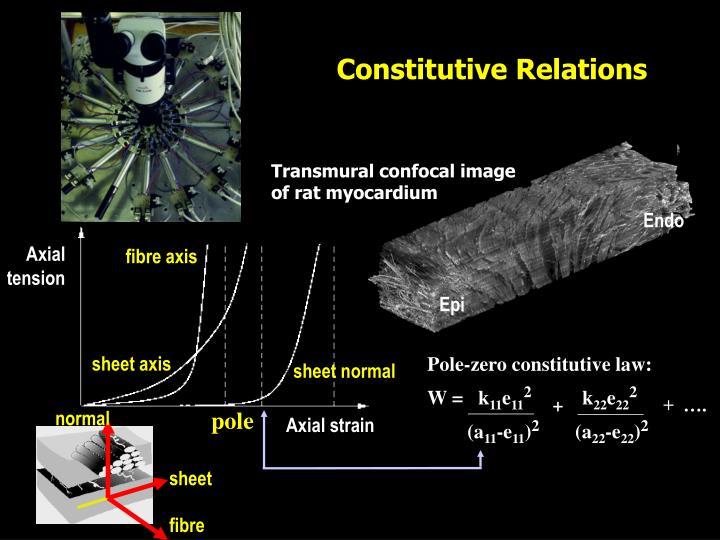 Transmural confocal image