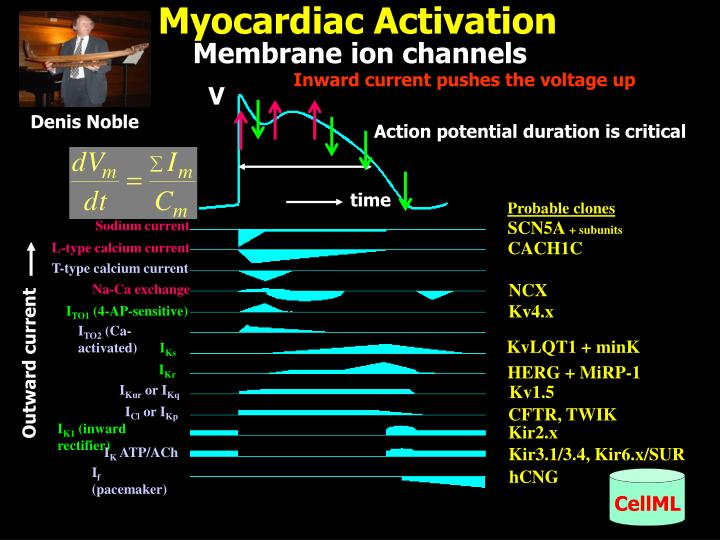 Myocardiac Activation