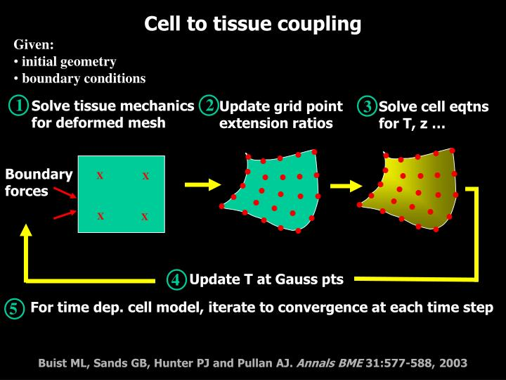 Solve tissue mechanics