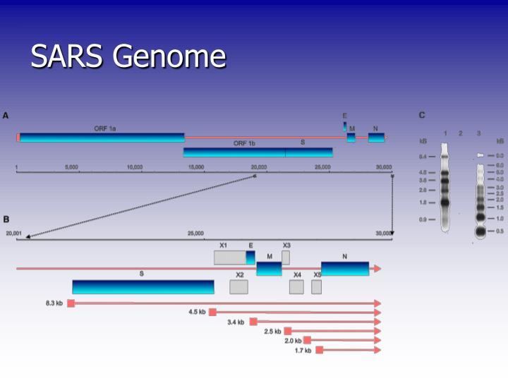 SARS Genome