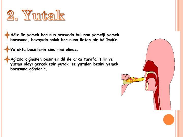 2. Yutak