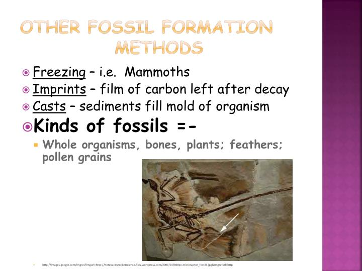 Other fossil formation    methods