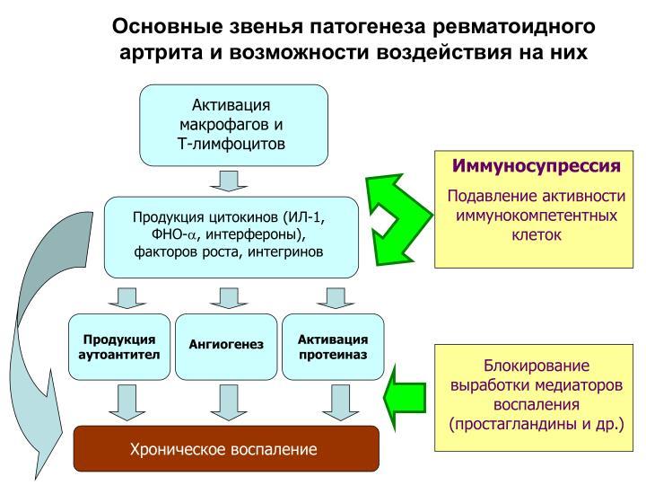Основные звенья патогенеза ревматоидного артрита и возможности воздействия на них