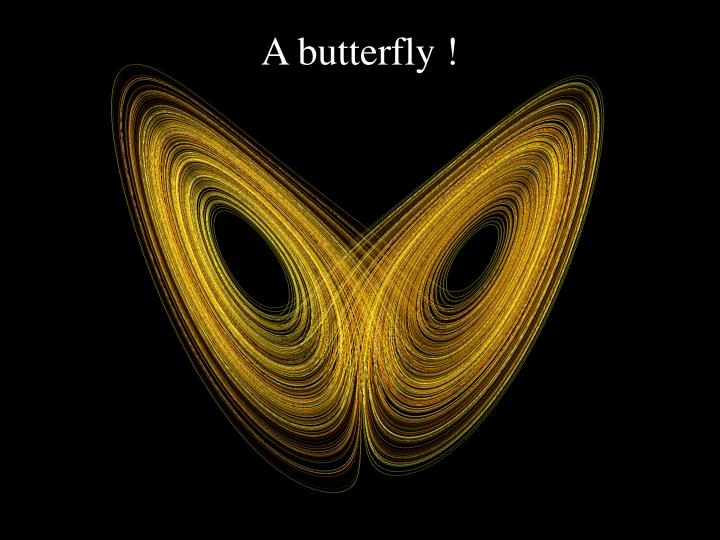 A butterfly !