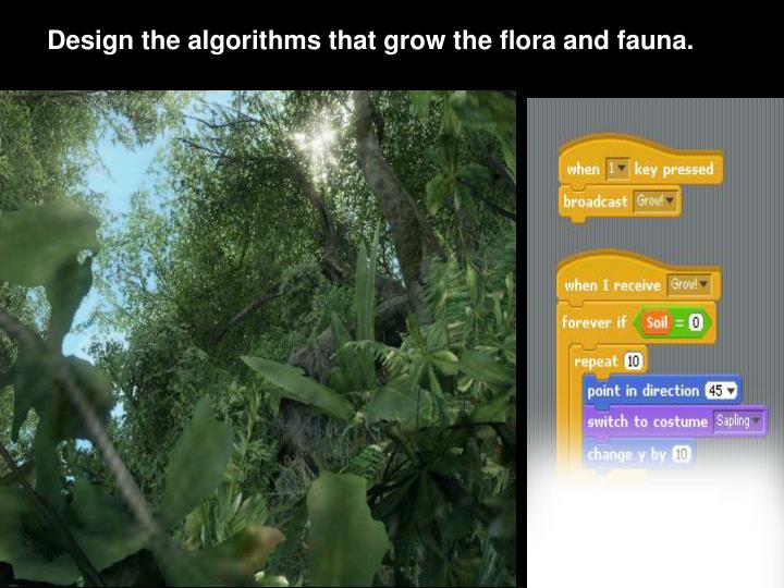 Design the algorithms that grow the flora and fauna.