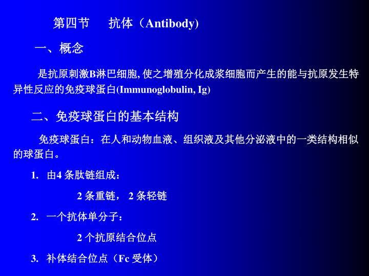 第四节      抗体(