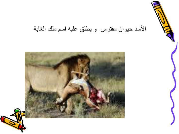 الأسد حيوان مفترس  و يطلق عليه اسم ملك الغابة