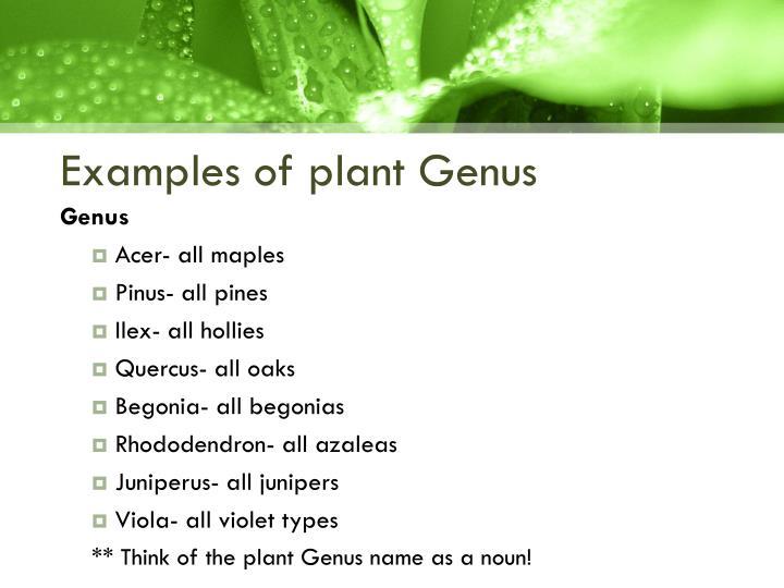 examples-of-plant-genus-n.jpg