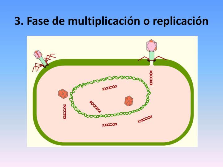 3. Fase de multiplicación o replicación