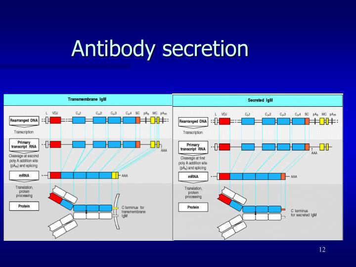 Antibody secretion
