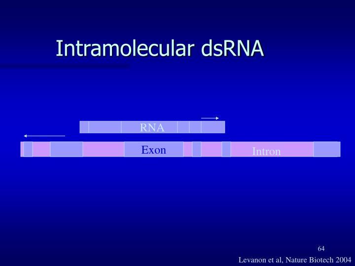 Intramolecular dsRNA