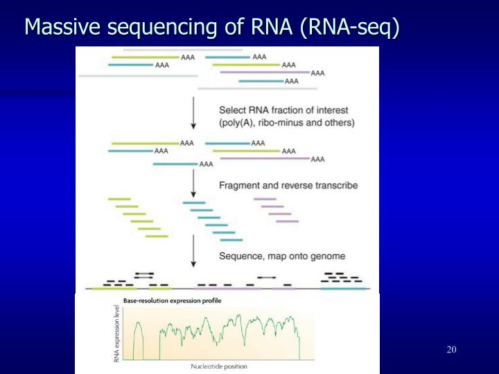 Massive sequencing of RNA (RNA-seq)
