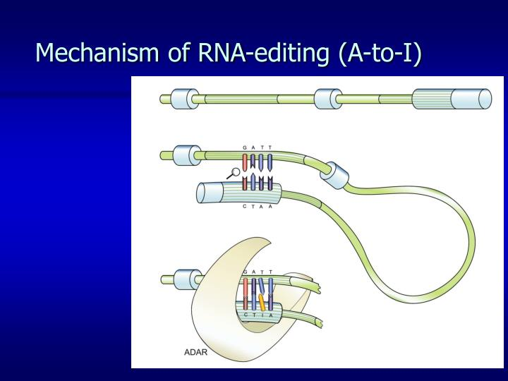 Mechanism of RNA-editing (A-to-I)