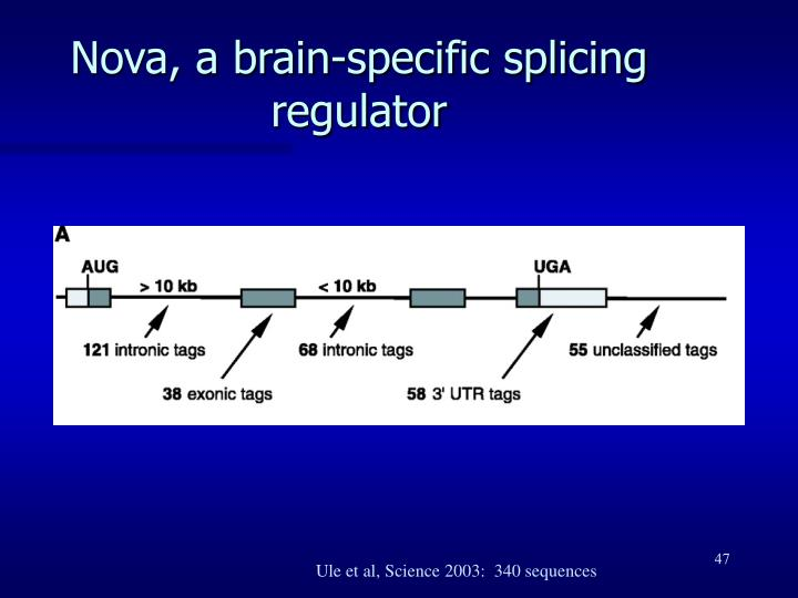 Nova, a brain-specific splicing regulator