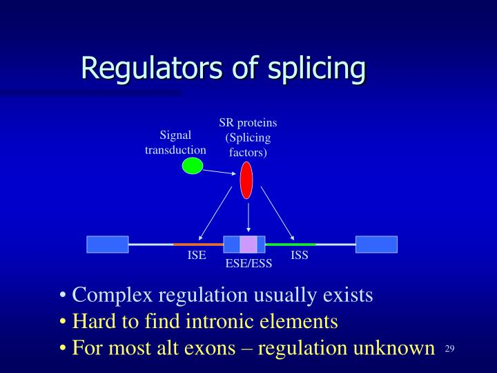SR proteins (Splicing factors)