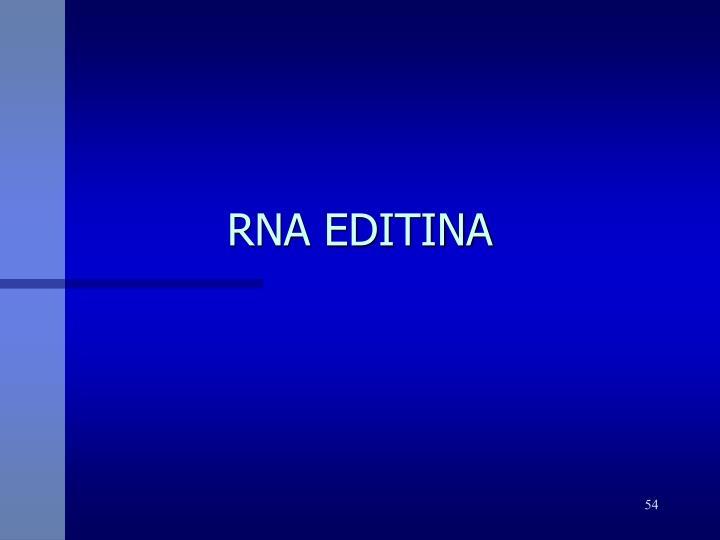 RNA EDITINA