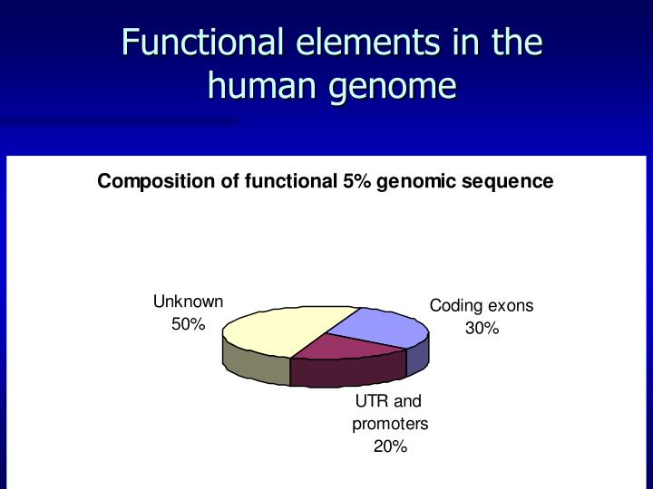 Functional elements in the human genome