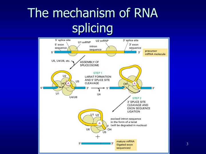 The mechanism of RNA splicing