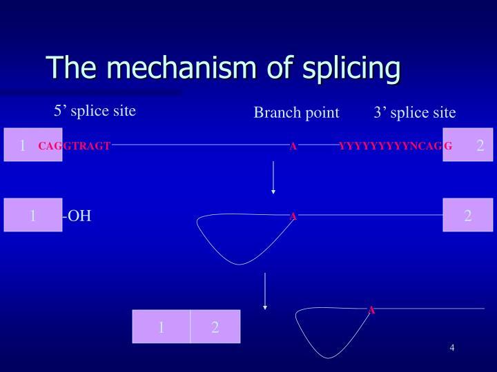5' splice site