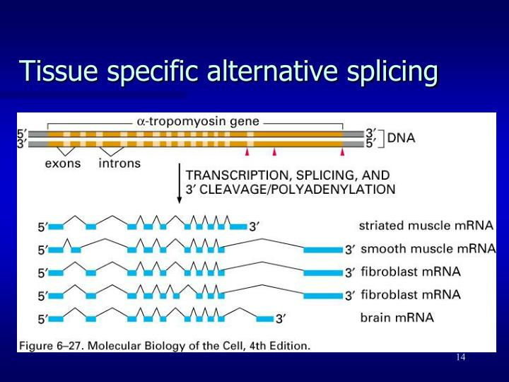 Tissue specific alternative splicing