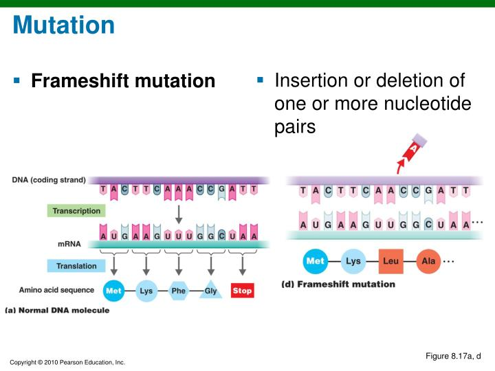 Insertion or deletion of one or more nucleotide pairs