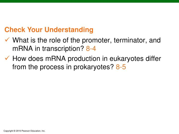 What is the role of the promoter, terminator, and mRNA in transcription?