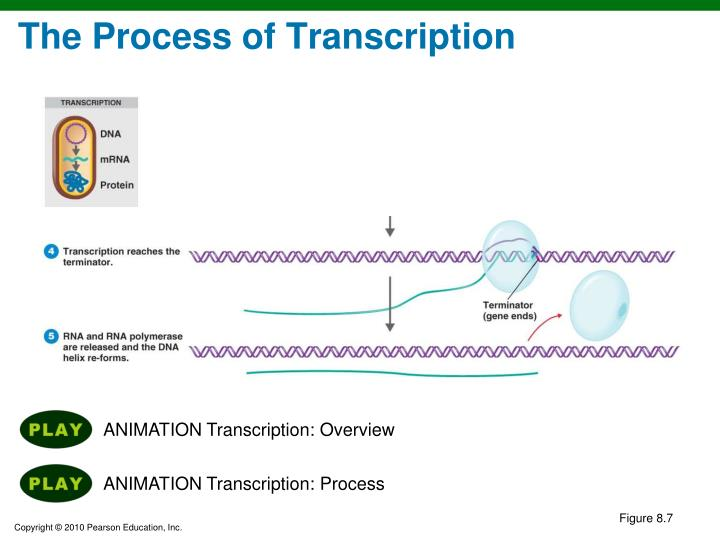 The Process of Transcription